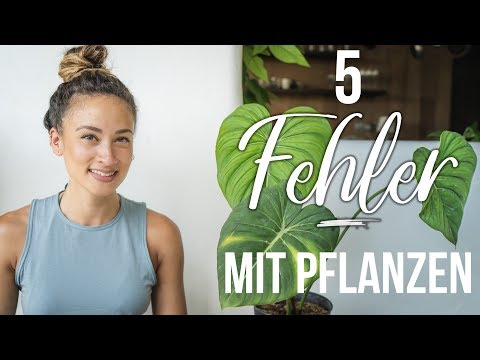 5 Fehler die Pflanzenmamis/papis bei Zimmerpflanzen machen