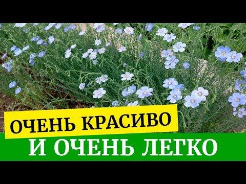 Самые неприхотливые и легко выращиваемые цветы