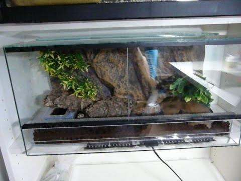 Como preparar terrario de gecko leopardo