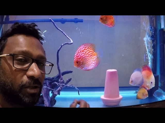 How to clean an Aquarium - Time-lapse Video with Instructions