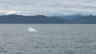 Sauts de l'orque