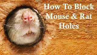The Best Ways To Block Mouse/Rat Holes. Keep Rats Out of Your House. Mousetrap Monday