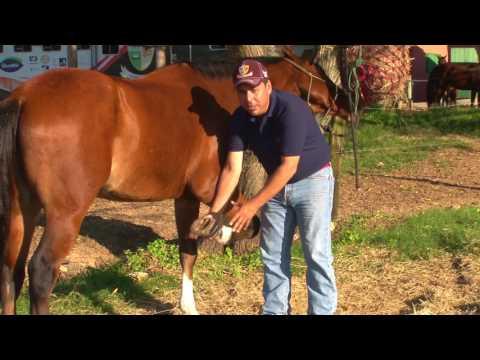 Como pegar nas patas do cavalo