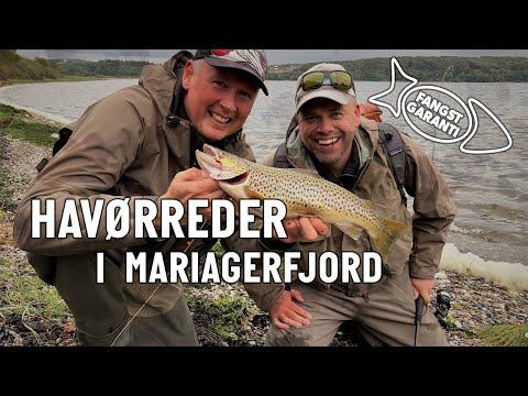 Havørredfiskeri i Mariager Fjord med Fangstgaranti
