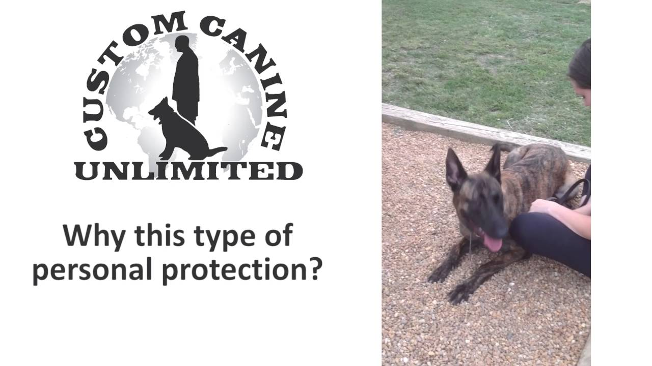 Personal Protection Dog Testimonial