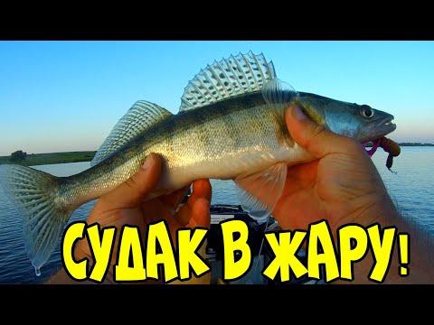 Рыбалка на спиннинг!Ищу судака в жару!Рыбалка на судака и щуку!Злой лебедь пытается меня прогнать!