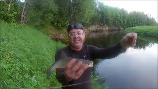 Оредеж река ленинградская область рыбалка