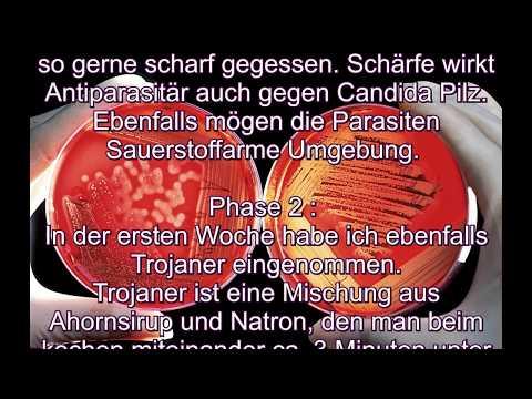 Obligatnyje die intrazellularen Parasiten auf dem genetischen Stand