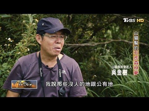 山貓幫的石虎森林夢(吳金樹) 一步一腳印 20190929