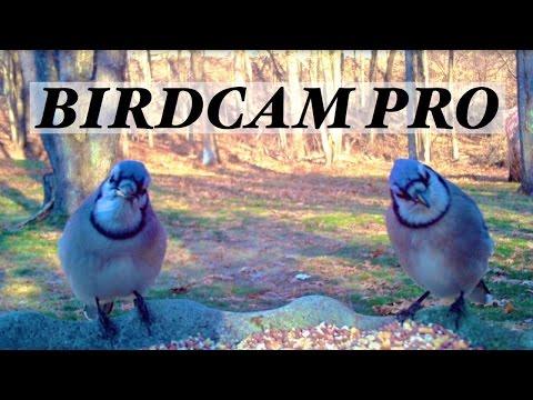 BirdCam Pro Trail Camera