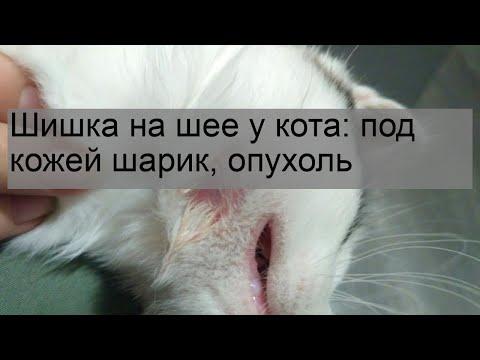 Шишка на шее у кота: под кожей шарик, опухоль