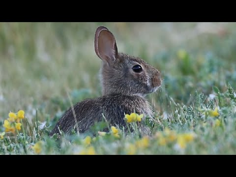 , title : 'Cute Bunny Rabbits Eating In The Wild
