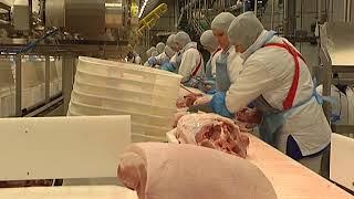 Куряне посетили свинокомплекс «Короча» в Белгородской области