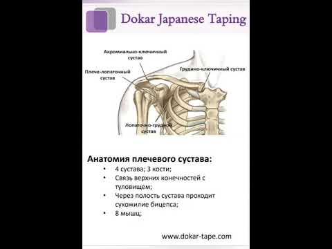 Защита плечевого сустава и профилактика травм.