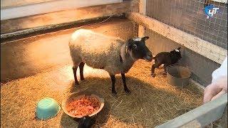 В деревне Лесная официально открылась эко-ферма