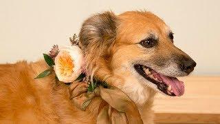 Garden Rose Dog Collar