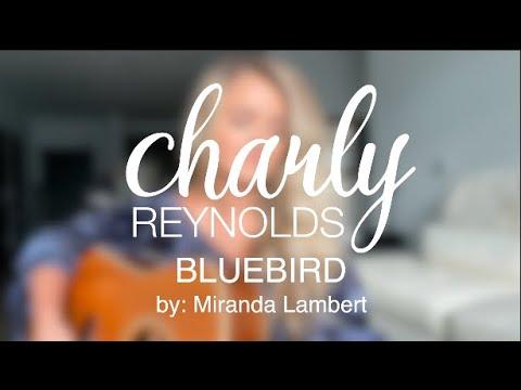 Bluebird (cover) by Miranda Lambert - Charly Reynolds