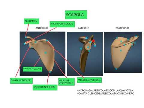 La diagnosi per la lombalgia