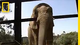 Elephant - Communication