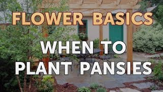 When to Plant Pansies