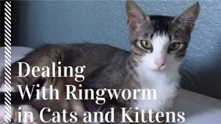 How to Deal With Ringworm in Cats and Kittens