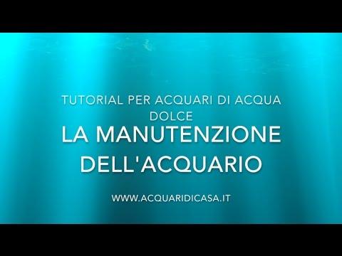 Manutenzione per acquario, cambio dell'acqua, potatura, pulizia dei vetri