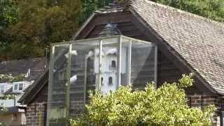 White Doves - Dove house - Pigeon breeders - Dúfukofi - Eldisdúfur - Fuglar