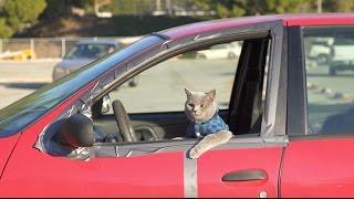 Pet Peeves: School Edition - Aaron's Animals - Video Youtube