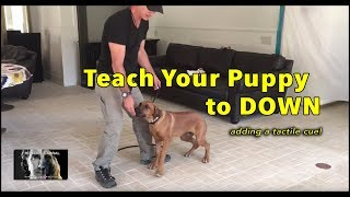 How to TEACH Your Puppy the DOWN Command - SIMPLE Puppy Training and FAST