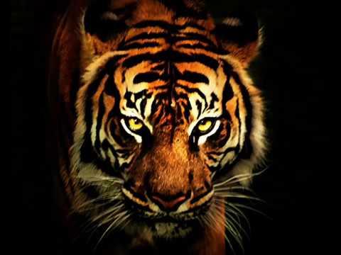 Survivor - Eye Of The Tiger (Audio)