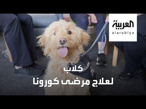 العرب اليوم - شاهد: هذا ما فعلته الكلاب مع مرضى