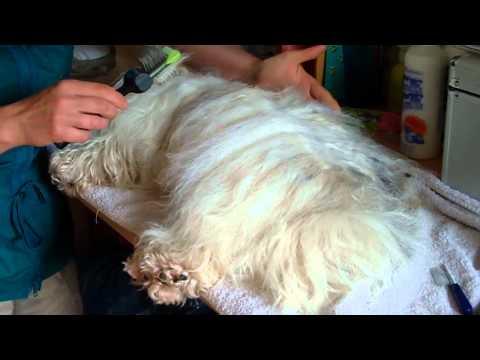 Tipps zum Bürsten mit der ActiVet Bürste (früher Les Poochs Bürste)