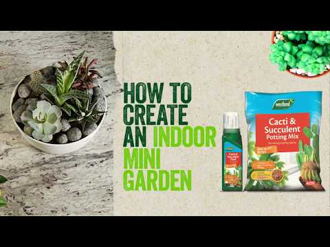 cacti potting mix Video