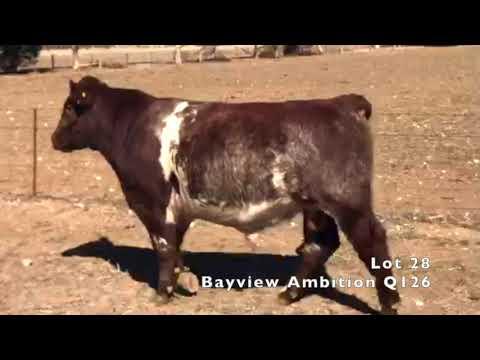 BAYVIEW AMBITION Q126
