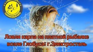 Платная рыбалка в ногинске и электростали