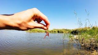 Червь. ловля рыбы на червя