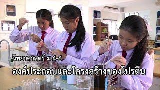 วิทยาศาสตร์ ม.4-6 องค์ประกอบและโครงสร้างของโปรตีน