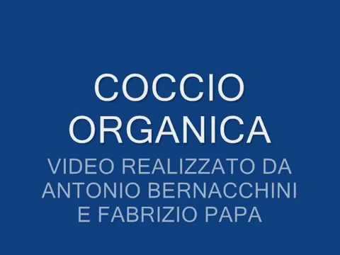 SAGGIO AL COCCIO: SOSTANZA ORGANICA