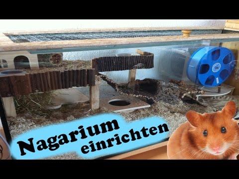 Nagarium einrichten (Teddyhamster)