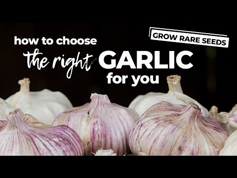 , title : 'How To Choose the Best Garlic To Plant
