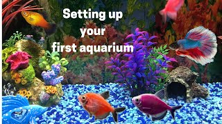 Beginners First Aquarium - How to Set up Your First Fish Tank