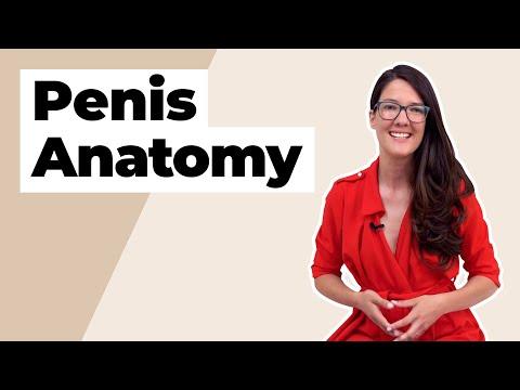 Modul în care penisul se schimbă odată cu vârsta