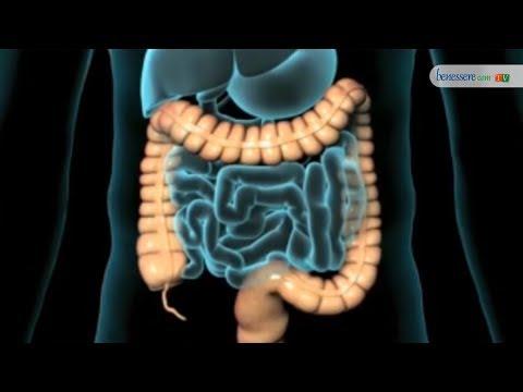 Vescica prostata intestino
