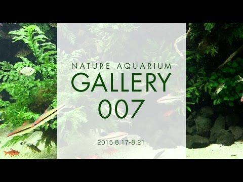 [ADAview] NATURE AQUARIUM GALLERY#007(EN)