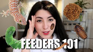 5 Feeder Insects for Pet Reptiles and Amphibians | Emzotic