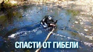 Собак, утопающих в луже мазута, спасли под Сергиевым Посадом - Подмосковье 2018 г.