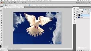 Selections and Masking Magic in Photoshop CS5