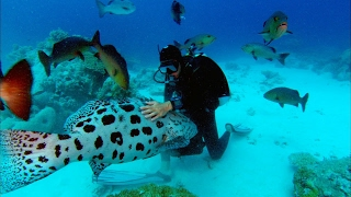 Sharkwater Trailer - Rob Stewart - HD