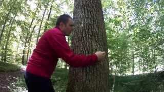 Tree Hugging Extreme