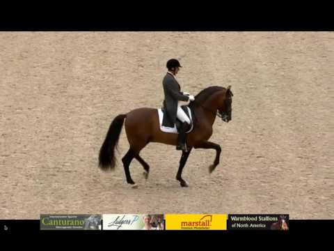 ANCCE | José Daniel Martín Dockx and Gandioso placed 8 th on the first day of CDI4* at Aachen 2016